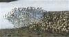 Migration d'un troupeau de caribous à la fin du printemps