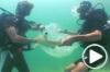 Des requins remis à l'eau en Thaïlande