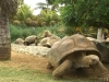 Miss France 2007 - Rencontre avec les tortues